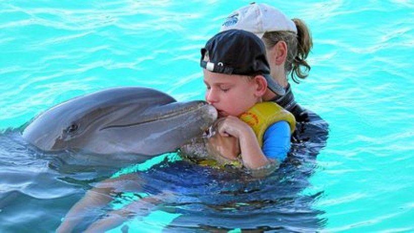 delfin wolfsburg